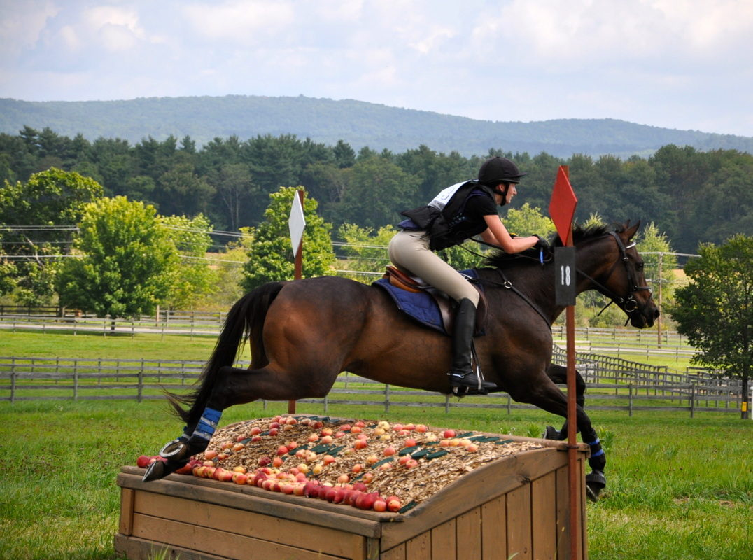 Cross country schooling is open! - Horse Farm in CT - Town Hill Farm